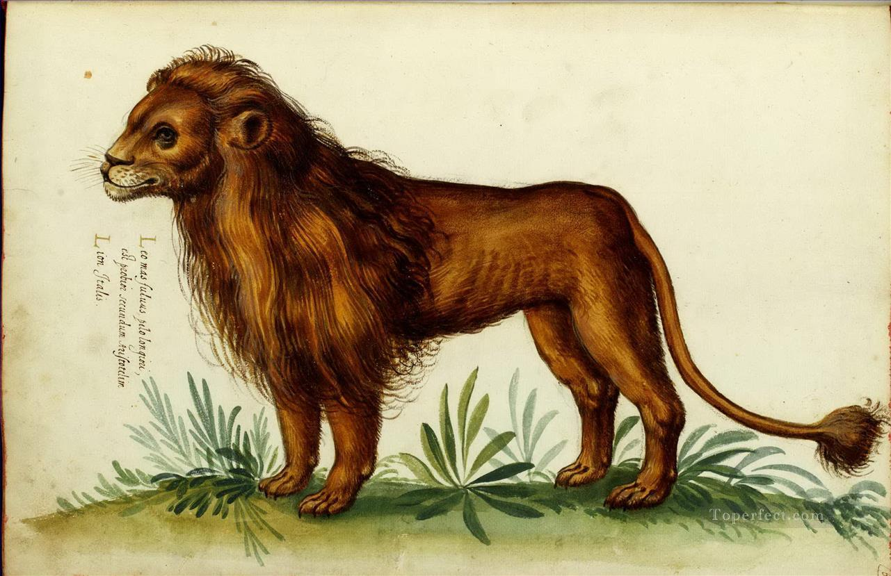 Italian English Animsld: Oil Paintings Of 4 Animal Lion Italian Art For Sale By Artists