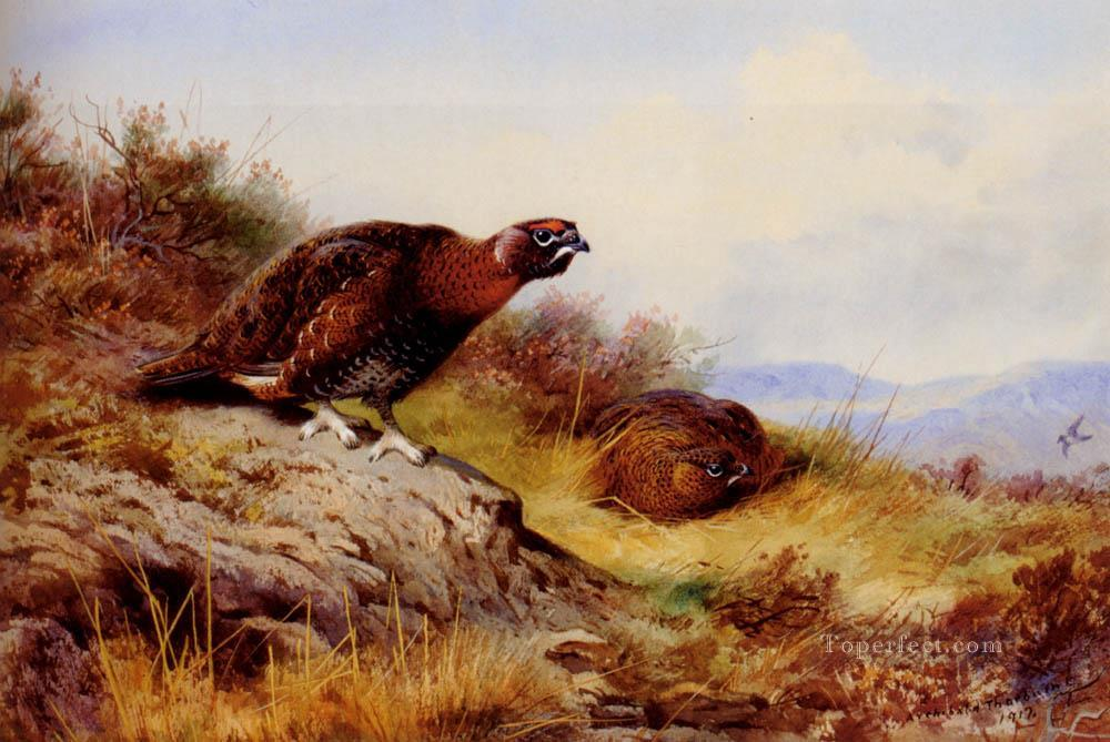 4 Red Grouse On The Moor Archibald Thorburn bird